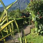 Arenal Volcano from the hotel grounds