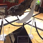 A 350-lb meteorite in the lobby...one of the biggest in the world!