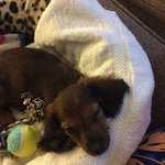 Our new pup, Mitzi, spent her first night at Mainstay Suites Merchant Drive.