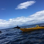 Dolphin next to our kayak!