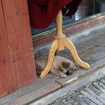 Mieszkańcy chyba bardzo lubią psy. Ten malec ma teraz sjestę.