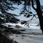 Carmel Beach thru the trees