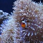 Foto di Seattle Aquarium