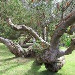 Kula Botanical Garden Foto