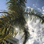 Palm trees provided plenty of shade.