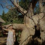 Baobab géant en allant à notre chambre