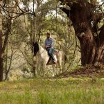 Exploring the oak lined trails of Horse Capital of The World (tm), Ocala/Marion County on horseb
