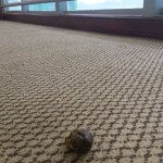 Какашечка в коридоре на 11 этаже.