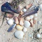 La playa esta llena de conchitas
