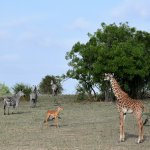 Photo of Lake Manze Tented Camp, Selous Game Reserve