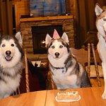 Barkwells, The Dog Lovers' Vacation Retreat Photo