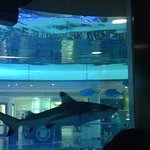 small shark from the inside of the aquarium at Morocco Mall