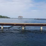 Área de Espectáculos para delfines. Es difícil fotografiarlos cuando no se está presentando el s