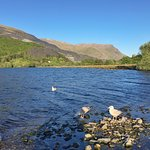 Birds and Snowdonia; how could I complaint