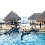 Foto de Dolphinaris Cozumel