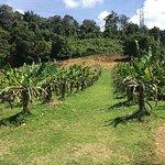 fruit farms in Langkawi