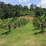 fruit farms in Langkawi
