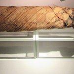 Mummified cat.