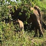 Photo of Elephant Rest - Udawalawa