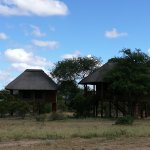Photo of nThambo Tree Camp