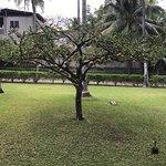 Foto de Hotel Tekuani Kal