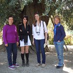 Visiting the Olivone, the largest olive tree in Europe during a Rome Olive Oil Tour & Convivio R