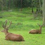 deers, मृग र जरायोको सिड़