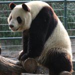 Photo of Beijing Zoo