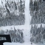 Looking down from Quicksilver gondola...look at the size of the trees for understand the height