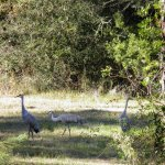 Mississippi Sandhill Crane National Wildlife Refuge