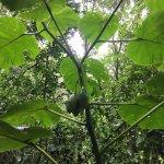 La Reserva Ecologica Poligono A