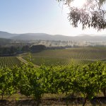 Vines at De Bortoli Estate