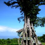 It shows you the tree house in the garden