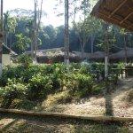 Nature Hunt Eco Camp, Kaziranga Foto