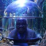 Somewhere in the Bristol Aquarium