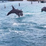 Dolphin training session