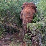 Elephant at Bundala