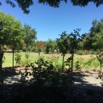Grounds at Immerse Winery