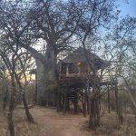 Foto de Tarangire Treetops