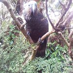 Hoppy the parrot