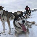 Photo of Era-Susi Huskies - Day Tours