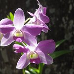 One of the many orchids