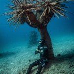 Free Diver Miguel Lozano in the hybrid garden of the Atlantic Museum