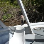 White Faced Monkey jumped right on our boat!!
