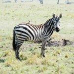 Photo of Saruni Mara