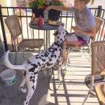 Wyatt on the pet friendly patio.