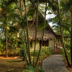 Bosque del Cabo Rainforest Lodge-bild