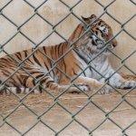 Photo of Asa Zoological Park