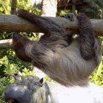 Photo of Zoological Wildlife Foundation
