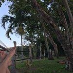 Ahhhh....the best hammock experience.